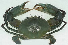 青蟹(图2)