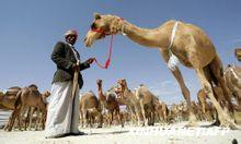 """扎法尔""""骆驼节"""